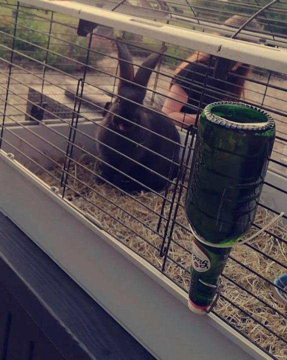 Het konijn van Franke is geslaagd jongens. Dat vraagt om een feestje, gefeliciteerd!